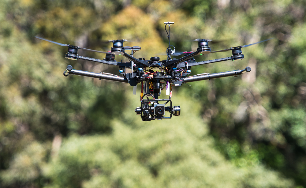 Drones will be used to detect koala numbers.